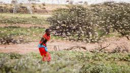 Seorang anak memukul kawanan belalang gurun dengan tongkat di dekat Desa Sissia, Samburu, Kenya, Kamis (16/1/2020). Serangga penghancur tanaman yang baru-baru ini meluluhlantakkan tanaman di Somalia dan Ethiopia, kini bermigrasi ke Kenya. (AP Photo/Patrick Ngugi)