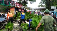 Pohon bertumbangan akibat terjangan puting beliung dan bikin macet lalu lintas kota Purwokerto. (Foto: Liputan6.com/Tagana BMS/Muhamad Ridlo)