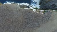 Penampakan koloni penguin Adélie dari atas, yang tertangkap kamera drone. (Thomas Sayre-McCord/Woods Hole Oceanographic Institution/Massachusetts Institute of Technology)