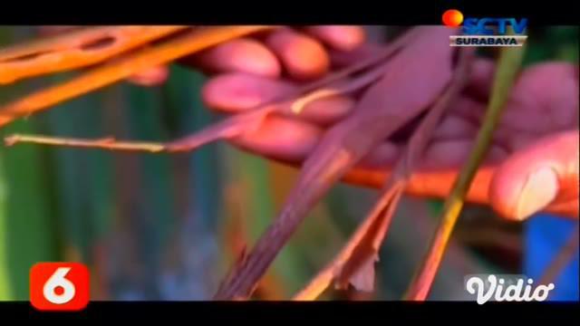 Hutan pelangi berada di kaki Gunung Raung yang berlokasi di Bondowoso, Jawa Timur. Banyak pengunjung yang ingin melihat langsung warna-warni pohon yang diketahui bernama latin eucalyptus, di hutan yang kini diusulkan sebagai kawasan Global Geopark ke...
