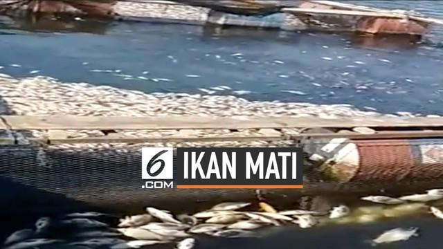 Ribuan ekor ikan mati mendadak di waduk saguling Bandung Barat. Kematian ikan ini diteliti Kementerian Kelautan dan Perikanan. Apa hasilnya?
