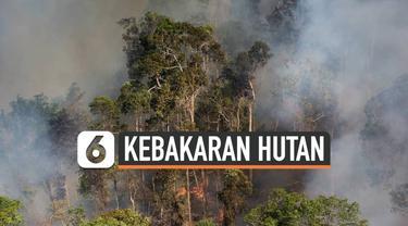 THUMBNAIL HUTAN AMAZON