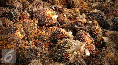 Potensi tanaman sagu dinilai tak akan mampu menandingi kelapa sawit apabila tanaman tersebut sama-sama dibudidayakan di lahan gambut.