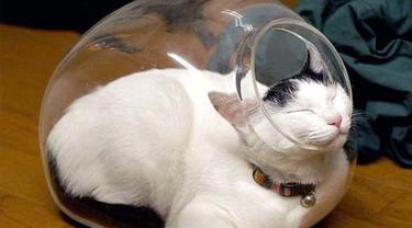 Muat di Mana Saja, 8 Potret Ini Buktikan Kucing Sebenarnya 'Tidak Bertulang'