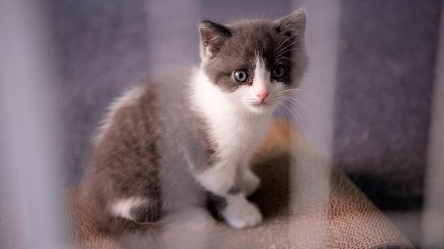 Unduh 100+  Gambar Kucing Ulang Tahun Paling Bagus