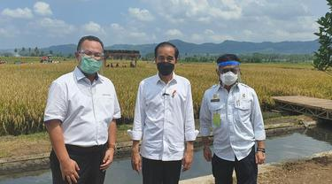 Tinjau Panen di Malang, Presiden Jokowi Buktikan Produksi Padi Memuaskan