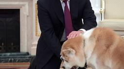 Presiden Rusia Vladimir Putin memberi makan anjingnya, Yume di Kremlin di Moskow, Rusia (7/12). Selain memiliki Yume, Presiden Putin juga memelihara anjing bulgarian shepherd yang diberi nama Buffy. (Sputnik/Kremlin/Alexei Druzhinin via Reuters)