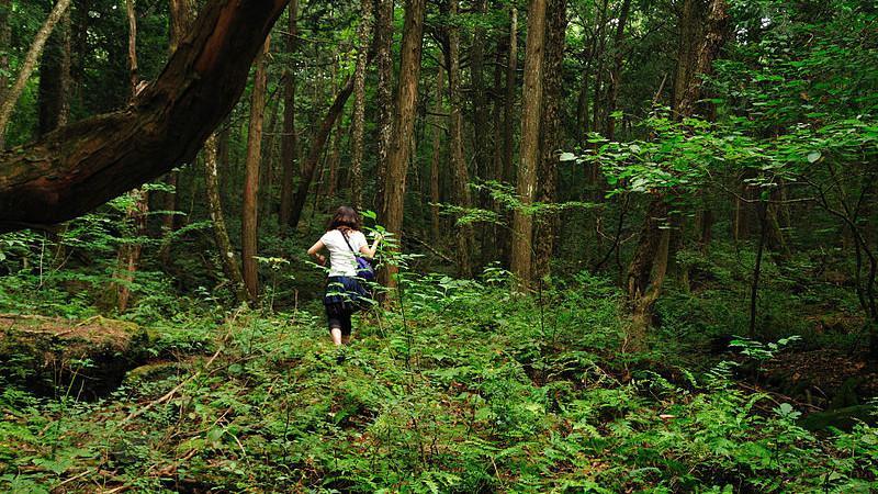 Hutan Aokigahara (Wikipedia/Creative Commons)