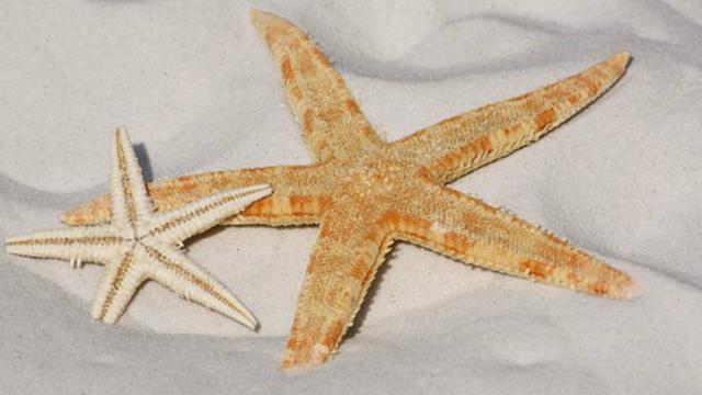 480 Gambar Hewan Teripang Laut Gratis