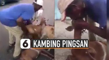 Sebuah video memperlihatkan cara penggembala membangunkan seekor kambing yang lemas terseret oleh gerombolan kawannya.
