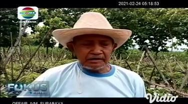 Harga cabai di sejumlah pasar tradisional di Madiun, Jawa Timur, Selasa (23/2) melambung tinggi mencapai Rp 90 ribu hingga Rp 100 ribu per kilogramnya. Mahalnya harga salah satu bumbu dapur, diduga karena pasokan cabai dari petani berkurang akibat cu...