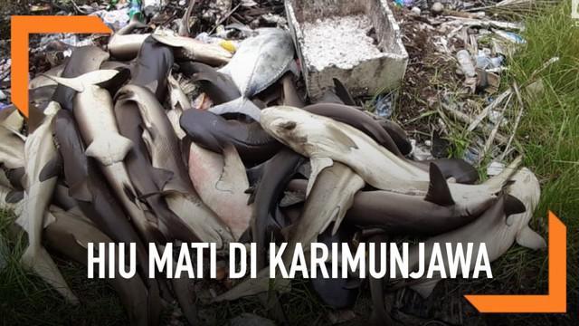 Ratusan ekor hiu ditemukan mati misterius di penangkaran Karimunjawa. Tak hanya hiu, puluhan ikan hias juga ikut mati.