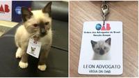 Kucing liar sering masuk ke gedung firma hukukm, akhirnya diangkat jadi karyawan. (Sumber: Boredpanda)