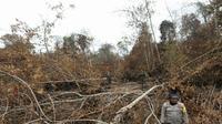 Kepala BNPB Doni Monardo meninjau kebakaran hutan dan lahan (karhutla) bersama Panglima TNI dan Kapolri di Riau pada Minggu (15/9/2019). (Dok Badan Nasional Penanggulangan Bencana/BNPB)