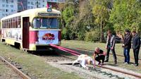 Seorang wanita di Rusia pamer kekuatan dengan menghela trem kosong seberat 19 ton.