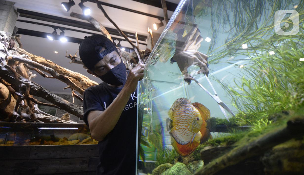 Pekerja menyelesaikan pembuatan aquascape air tawar di Nickz Aquascape, Serpong, Tangerang Selatan, Banten, Selasa (20/10/2020). Pada masa pandemi saat ini, pemesanan aquascape meningkat hingga 80 persen. (merdeka.com/Dwi Narwoko)