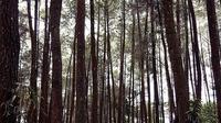 Hutan Pinus  Nongko Ijo Madiun (dok.Instagram2_febianagita_/https://www.instagram.com/p/BrcxEXNH_jQ//Devita