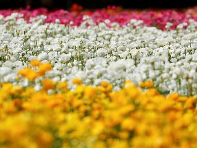 Berita Taman Bunga Hari Ini Kabar Terbaru Terkini Liputan6 Com