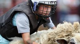 Seorang anak mengenakan helm dan rompi pelindung menungangi domba selama kompetisi Wool Riders Only Mutton Bustin 'di Iowa State Fair di Des Moines, Iowa, AS (12/9/2019). Lebih dari satu juta pengunjung mengunjungi Iowa State Fair per tahun. (Chip Somodevilla/Getty Images/AFP)