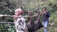 Sebanyak 30 ekor celeng, di Dawuhan, Wanayasa, Banjarnegara berhasil ditangkap pada September 2019. (Foto: Liputan6.com/Supriyanto untuk Muhamad Ridlo)