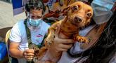 Seekor anjing peliharaan menerima vaksin rabies gratis di Manila, Filipina, pada 28 September 2020. Hari Rabies Sedunia diperingati tiap 28 September untuk menyebarkan kesadaran akan pencegahan rabies pada hewan peliharaan. (Xinhua/Rouelle Umali)