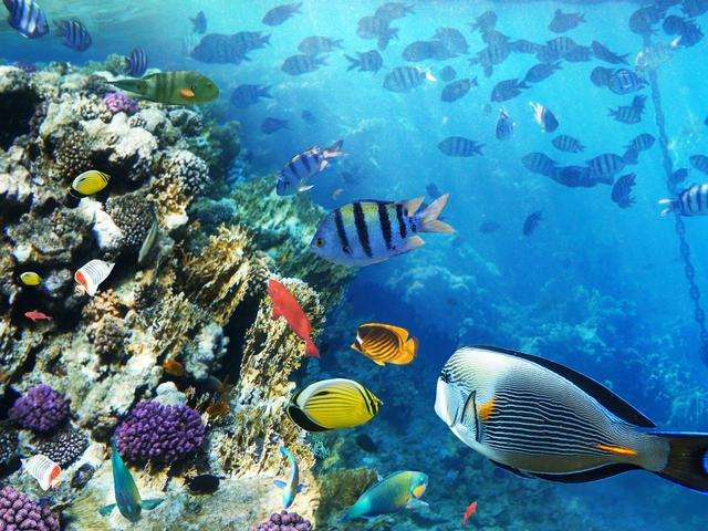 Rantai Makanan Di Laut Yang Dianggap Sepele Kenali Untuk