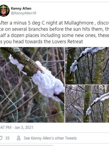 Fenomena aneh seperti gulali di dahan pohon. (Twitter Kenny Allen/@KennyAllen18)