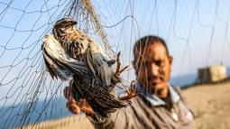Seorang pria menangkap burung puyuh yang terjerat jaring perangkap di sebuah pantai di Khan Yunis di Jalur Gaza selatan (11/9/2019). Palestina membangun ratusan meter jaring sutra kuning di sepanjang garis pantai di Jalur Gaza untuk memburu burung yang bermigrasi. (AFP Photo/Said Khatib)