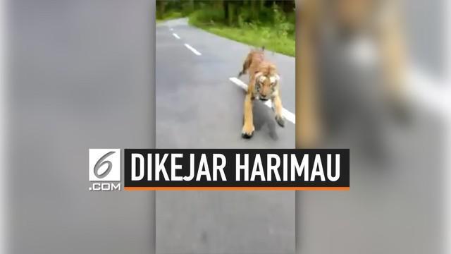 Detik-detik menegangkan pengendara motor dikejar seekor harimau ketika melintasi jalan di Taman Nasional Nagarahole, India Selatan.