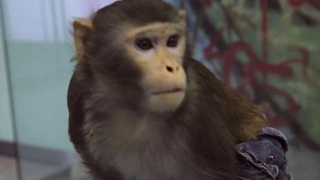 Tato Punggung Hasil Karya Monyet Global Liputan6com