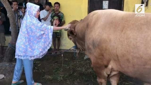 """Pada Idul Adha tahun ini, Via Vallen berkesempatan untuk berkurban. Seekor sapi berukuran super besar pun dipilih pelantun lagu """"Meraih Bintang"""" tersebut sebagai hewan kurbannya."""