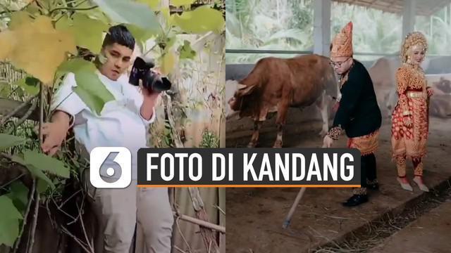 Berbeda dari yang lain aksi pasangan pengantin ini memiliki cara unik untuk mengabadikan momen foto prewedding yaitu di kandang sapi dan bebek.