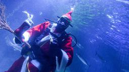 Chief fishkeeper, Timo Kaminski mengenakan kostum sinterklas menyelam untuk memberi makan ikan di akuarium Multimar Wattforum di Toenning, utara Jerman, Selasa (4/12). Aksi tersebut untuk memeriahkan perayaan Natal. (MARKUS SCHOLZ / DPA / AFP)