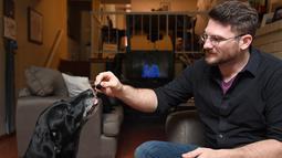 Brett Hartman meneteskan ekstrak ganja TreatWell ke Cayley untuk mengobati nyeri pinggul dan kecemasan anjingnya itu, di Los Angeles, 8 Juni 2017. TreatWell merupakan produk baru dari ganja medis untuk penyembuhan bagi hewan peliharaan. (Robyn Beck/AFP)