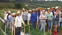 Noiva do Cordeiro dihuni oleh 600 orang penduduk wanita.