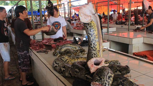 daging ular yang harus dihindari