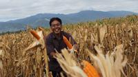 Krispian di tengah lahan jagung di Desa Kalawara, Kecamatan Gumbasa, Sigi, Sulawesi Tengah (Istimewa)