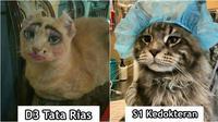 Meme kucing (Sumber: Twitter/penyok_goblok)