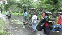 Puting beliung di Jember, Jawa Tengah, mengakibatkan belasan tiang listrik dan gudang tembakau roboh.