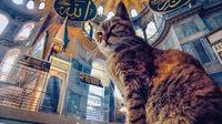 Mengenang Gli, kucing penghuni Hagia Sophia. (Sumber: Instagram/hagiasophiacat)