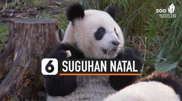 THUMBNAIL panda