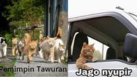 Kucing Oranye (Sumber: Instagram/meme.comik.indonesia)