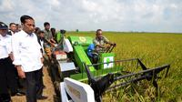 Presiden Joko Widodo melihat seorang petani melakukan panen padi di Desa Kedokan Gabus, Kecamatan Gabus Wetan, Kabupaten Indramayu, Rabu (18/3/2015). (Rumgrapres/Agus Suparto)