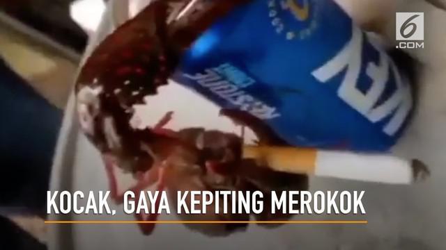 Tingkah aneh seekor kepiting merokok layaknya manusia terekam kamera.