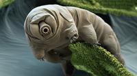 Dua ekor tardigrade bisa bertahan hidup setelah 30 tahun lebih terperangkap es. Si 'beruang air' bahkan bisa bertelur!