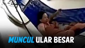 VIDEO: Detik-Detik Ular Besar Masuk ke Dalam Rumah Warga