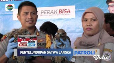 Polres Pelabuhan Tanjung Perak dan BKSDA berhasil gagalkan penyelundupan ratusan satwa terlindungi dan ilegal dari Makassar.