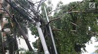Pohon tumbang terlihat di kawasan Cikini, Jakarta, Kamis (22/11). Hujan deras disertai angin kencang  melanda Ibukota pada Kamis (22/11) sore menyebabkan sejumlah pohon tumbang dan mengganggu arus lalu lintas. (Liputan6.com/Immanuel Antonius)