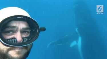 Seorang penyelam beruntung memiliki pengalaman selfie dan merekam video bersama paus.