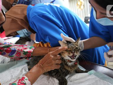 Petugas memeriksa seekor kucing saat melakukan vaksinasi antirabies terhadap hewan peliharaan di Kelurahan Rawa Jati, Jakarta, Sabtu (7/11/2020). Pemberian vaksin gratis tersebut untuk menghindari dan mengantisipasi penyebaran penyakit rabies kepada hewan peliharaan. (merdeka.com/Imam Buhori)